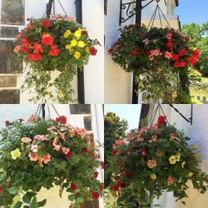 Hanging Baskets, June 2018